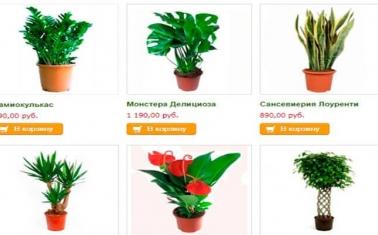 Интернет-магазин декоративных растений