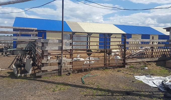 Молочный завод и ферма в собственности в МО