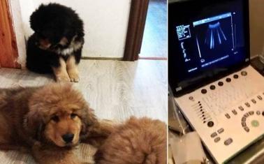 Успешная ветеринарная клиника — 16 лет на рынке